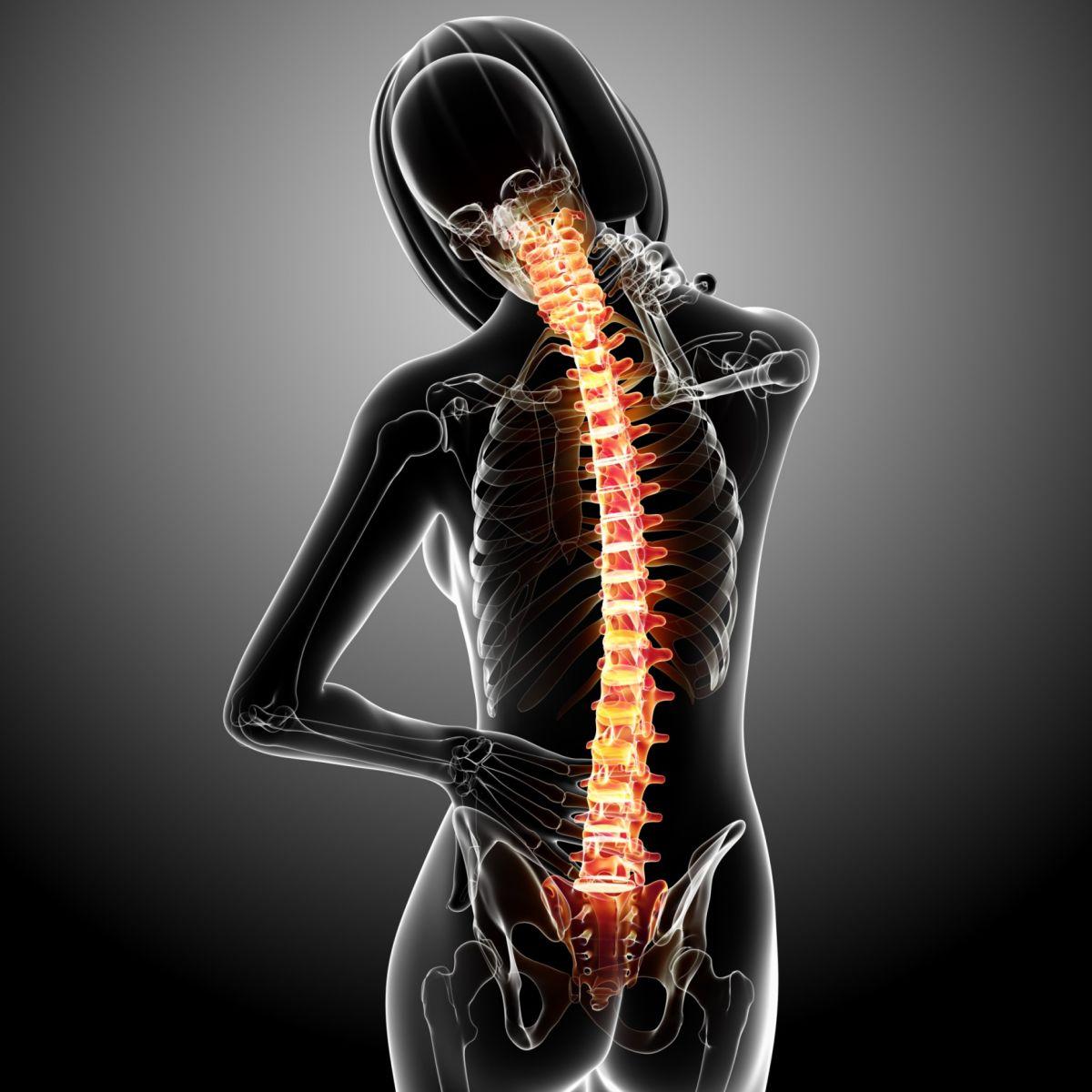 Schnittstelle zwischen Gehirn und Rückenmark soll Gehfunktion ...